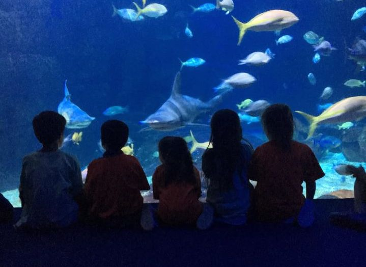 Group of preschool kids watching sharks and different fish in a big aquarium at a Preschool & Daycare Serving Hampton Roads, VA